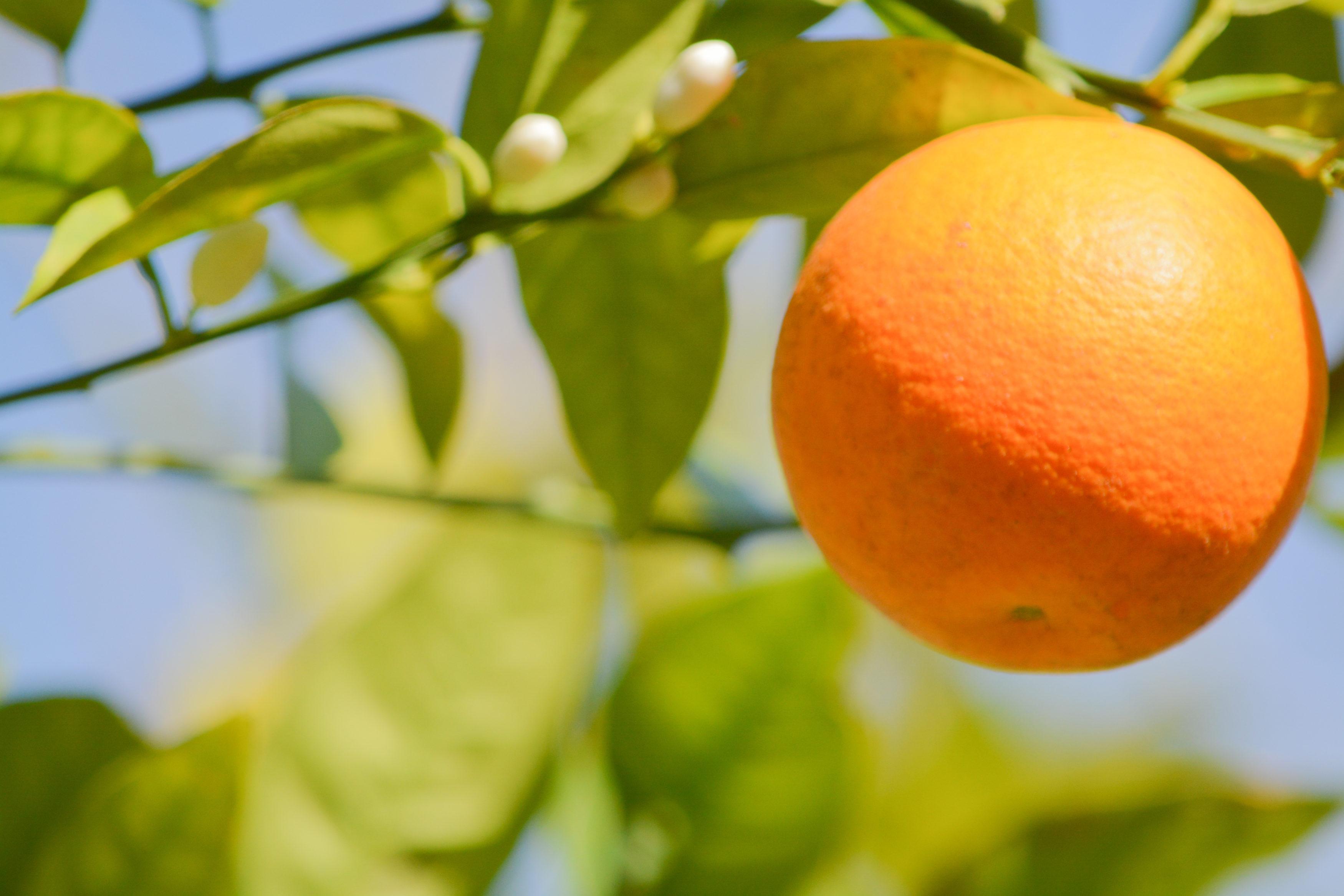 orange-florida-3500x2333.jpeg