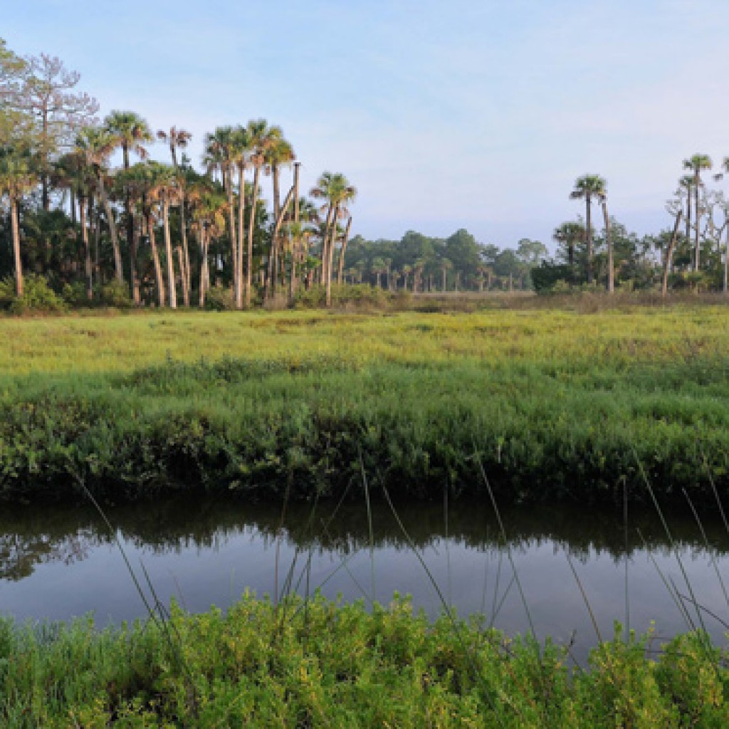 Florida_Forever_Calendar__AUG__LINC.us__W.Dickey__c_2008-1024x1024.jpg