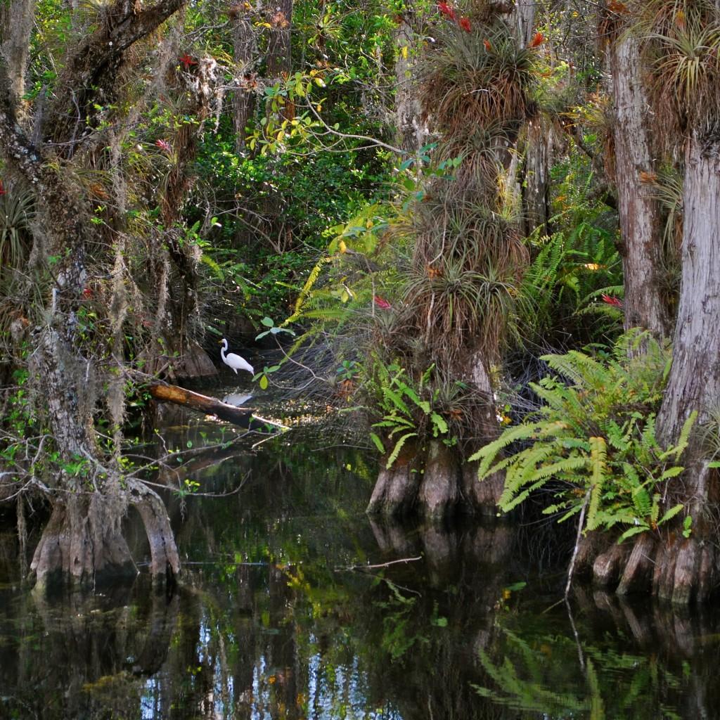 freshwater-swamp-1024x1024.jpg
