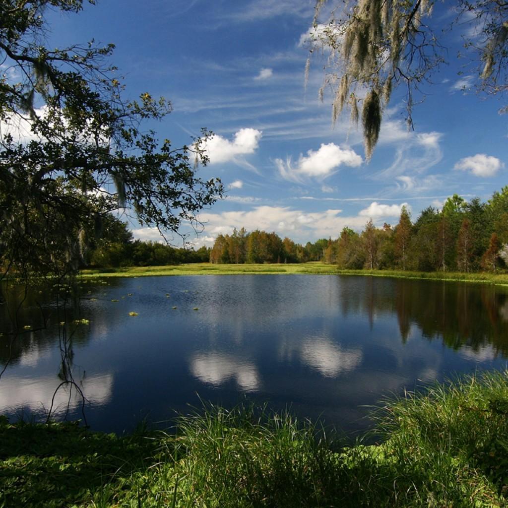 florida-wetlands-1024x1024.jpg