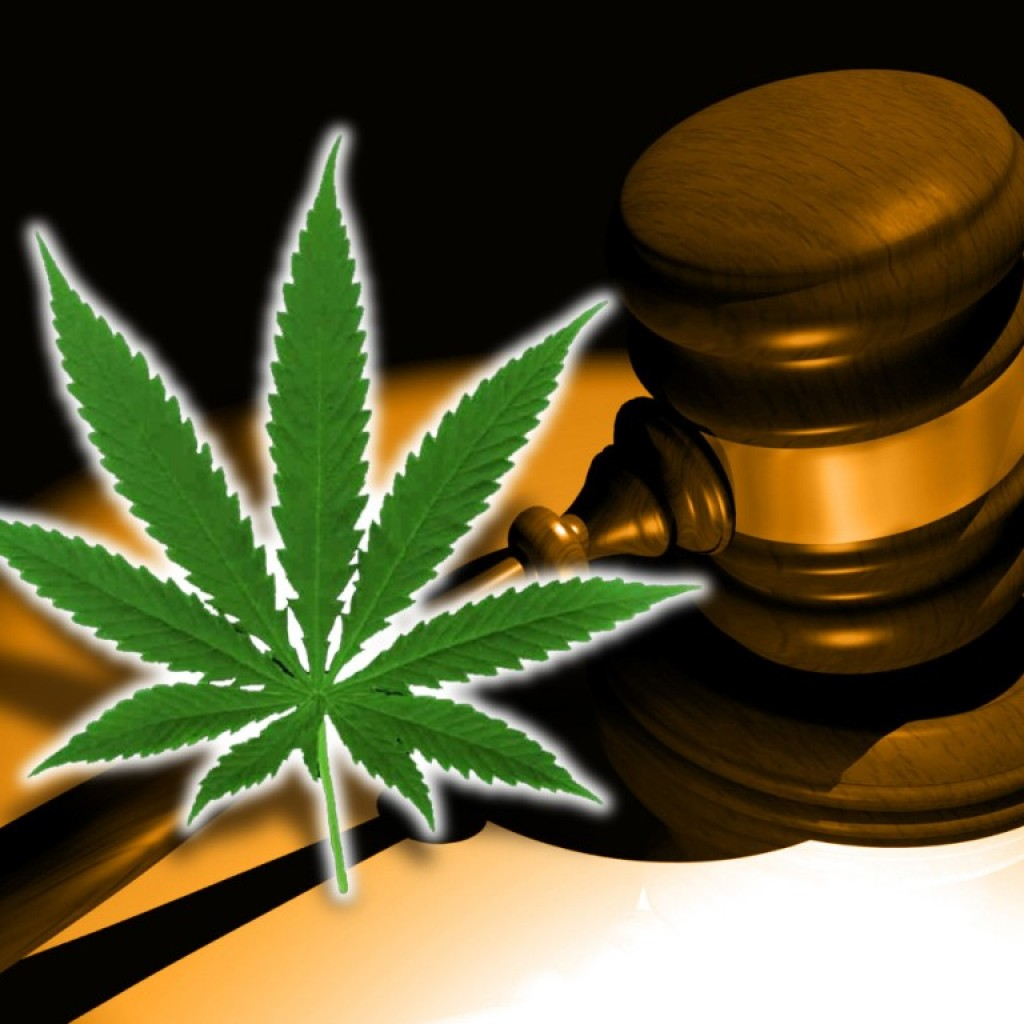 marijuana-charlottes-web-courts-1024x1024.jpeg