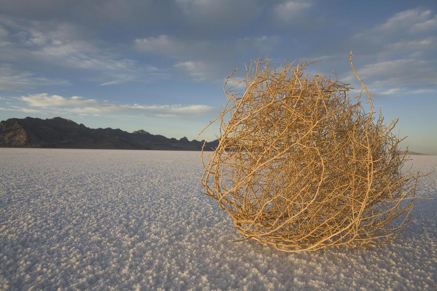 tumbleweed-capitol.jpg