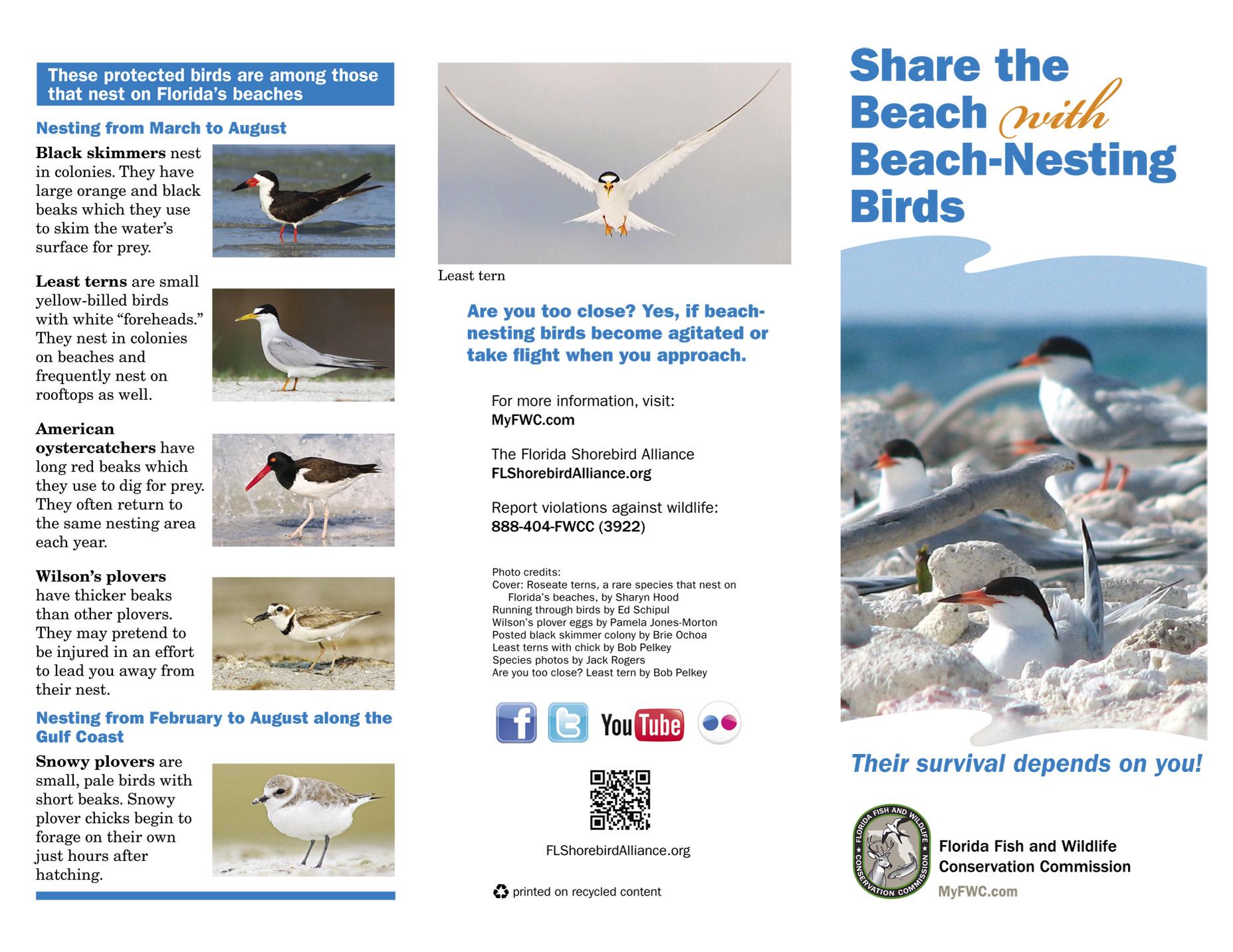 share the beach 1
