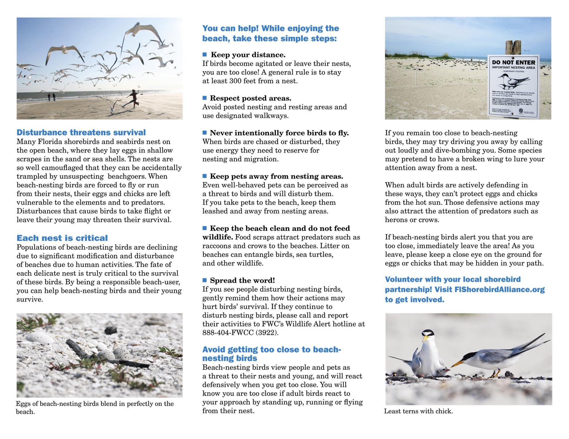 share the beach 2