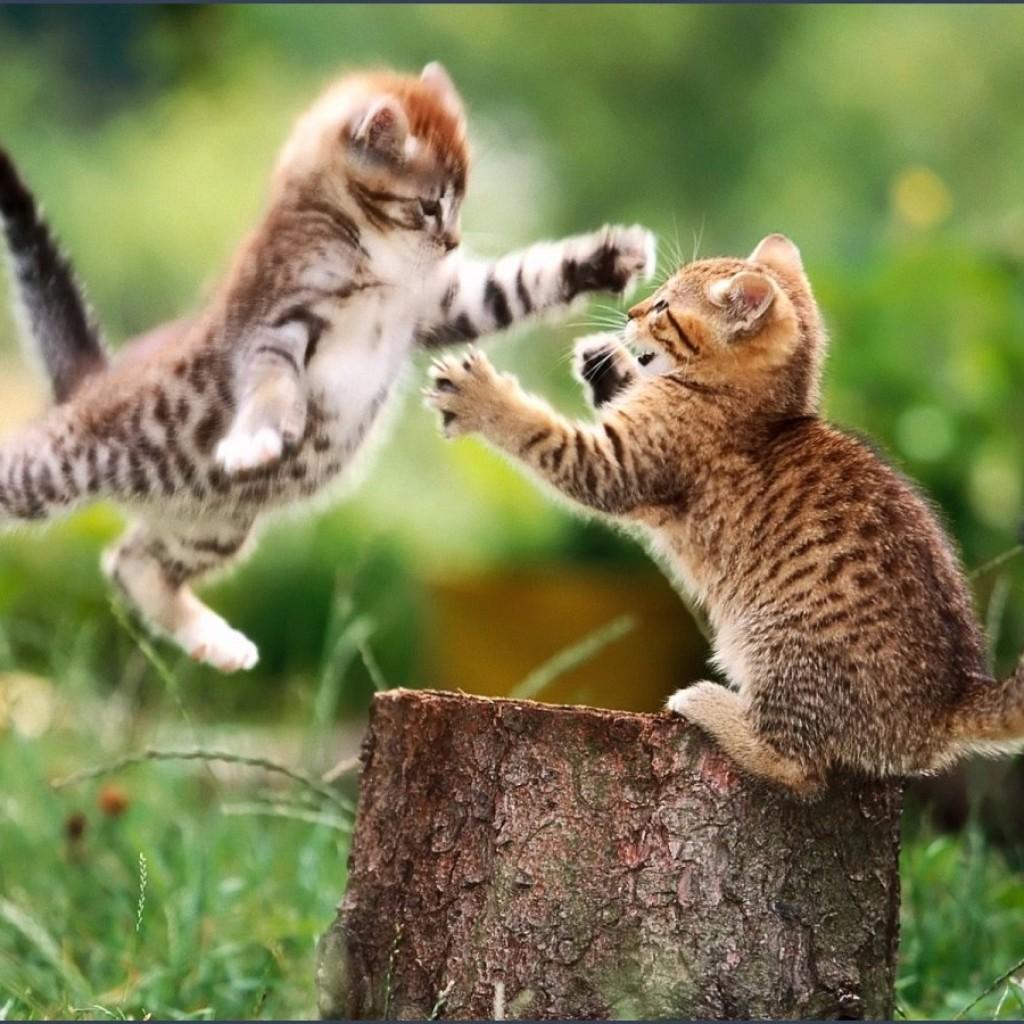 cat-fight-1024x1024.jpg