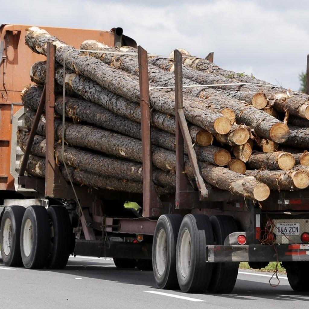 timber-florida-e1441635115636-1024x1024.jpg