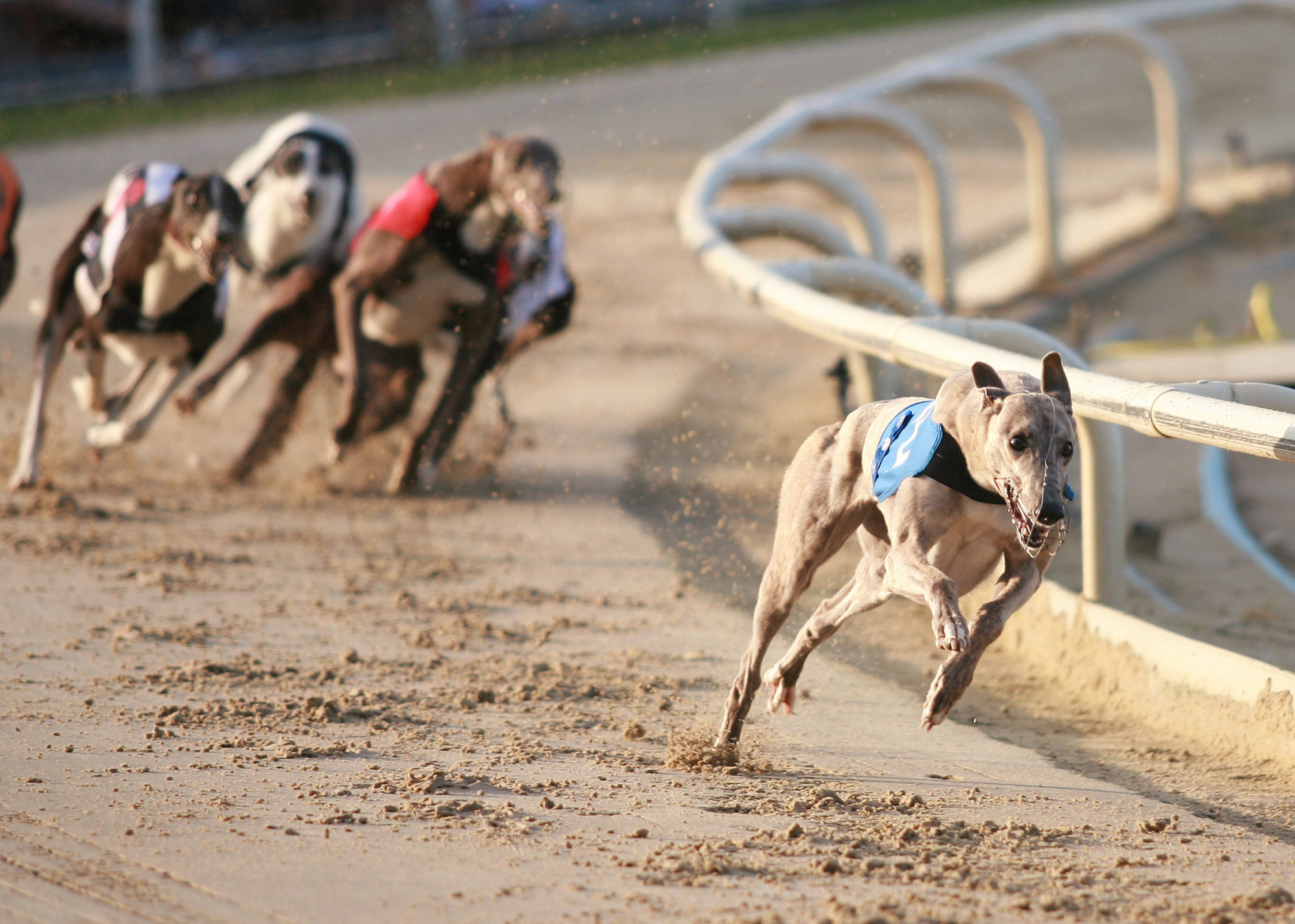 Ending Greyhound Racing Could Cost