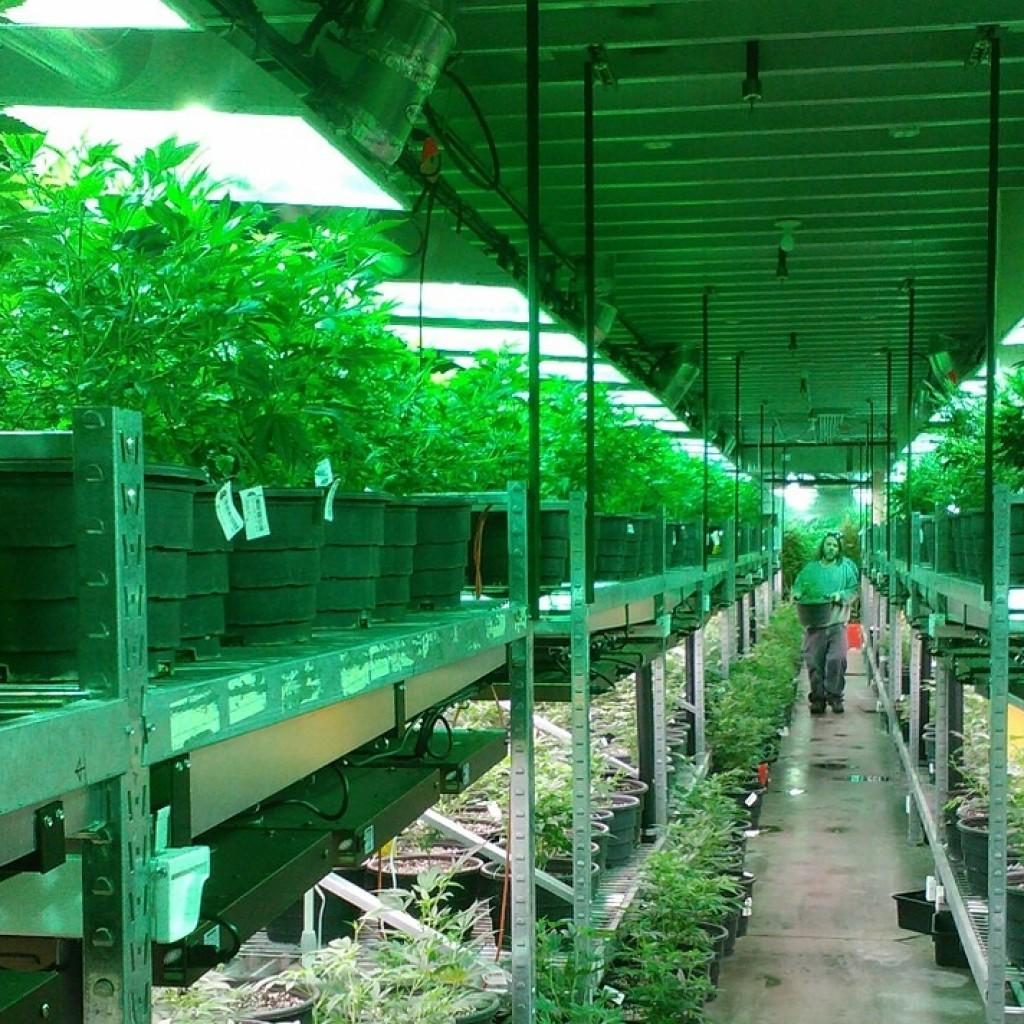 Florida-Approves-5-Nurseries-To-Grow-Medical-Marijuana