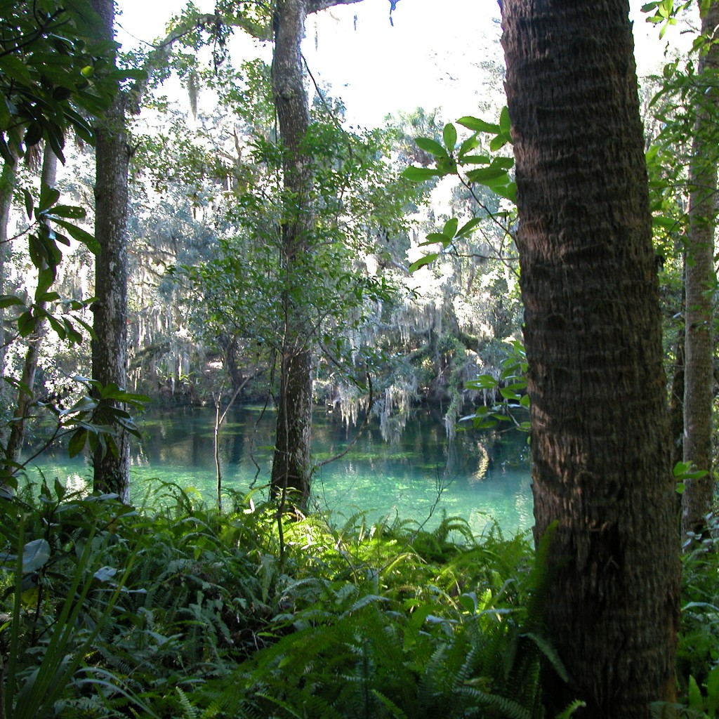 land-conservation-florida-1024x1024.jpg