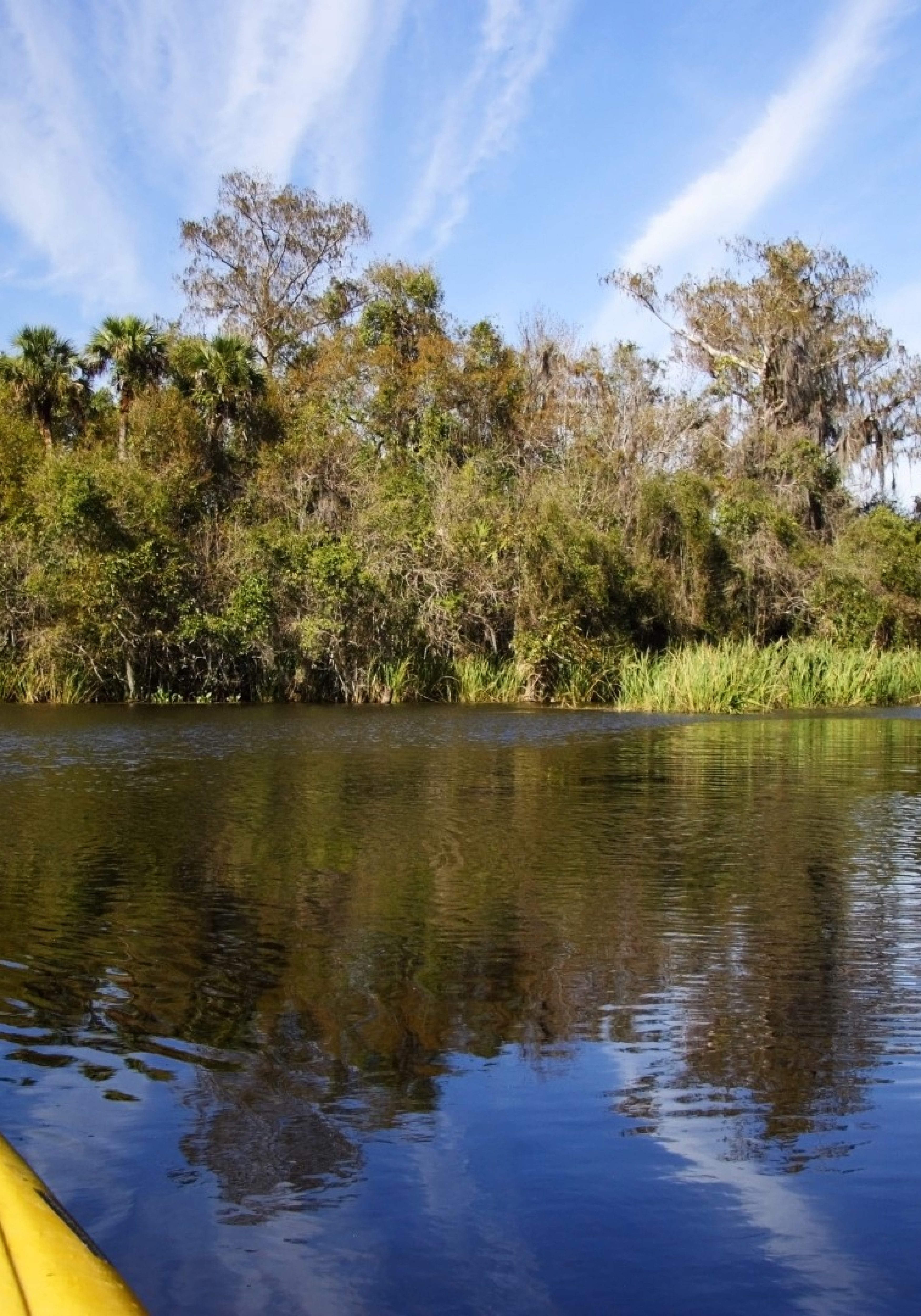 Big-Cypress-National-Preserve-Large-3500x5000.jpg