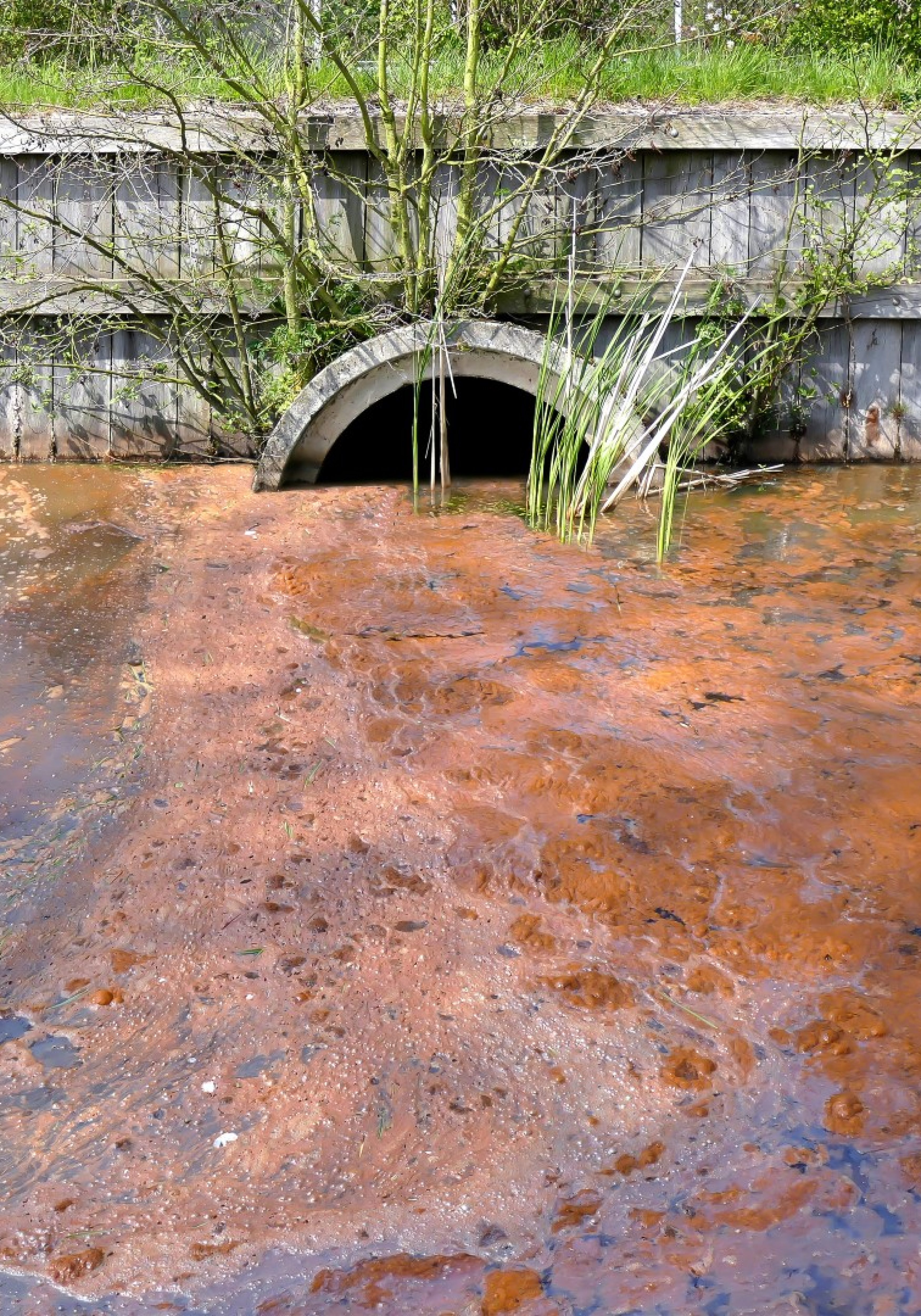 sewage-spill-Large-3500x5000.jpg
