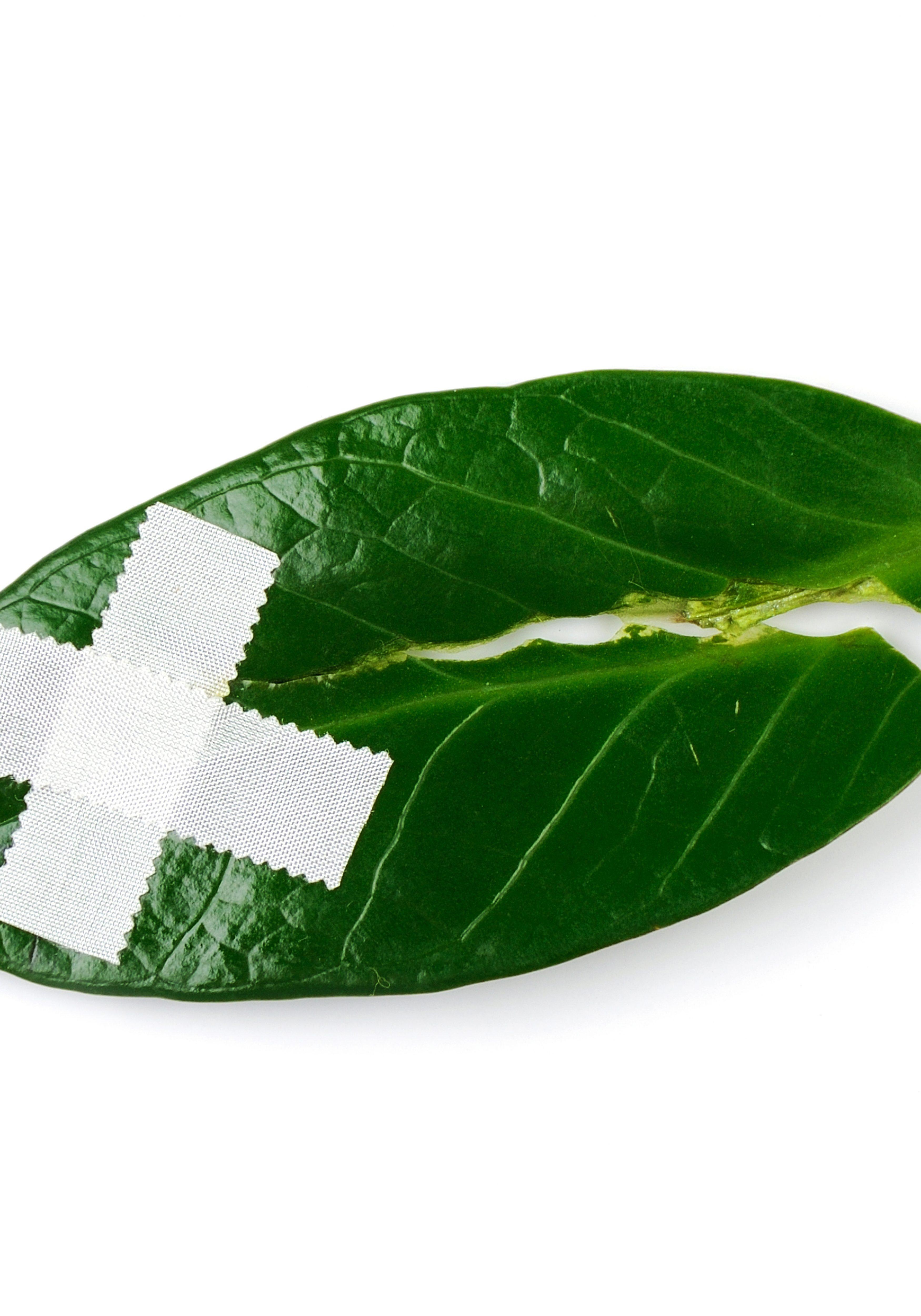 Band-Aid-environment-3500x5000.jpg