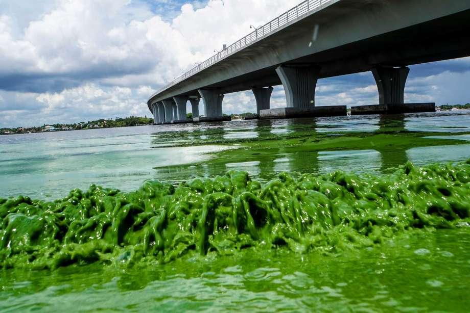 algae-bloom-06.30.jpg