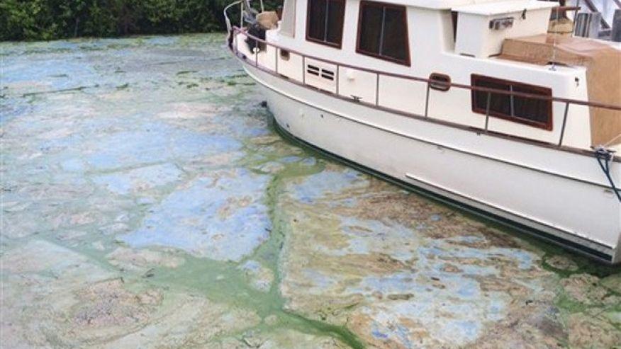 algae-blooms.jpg