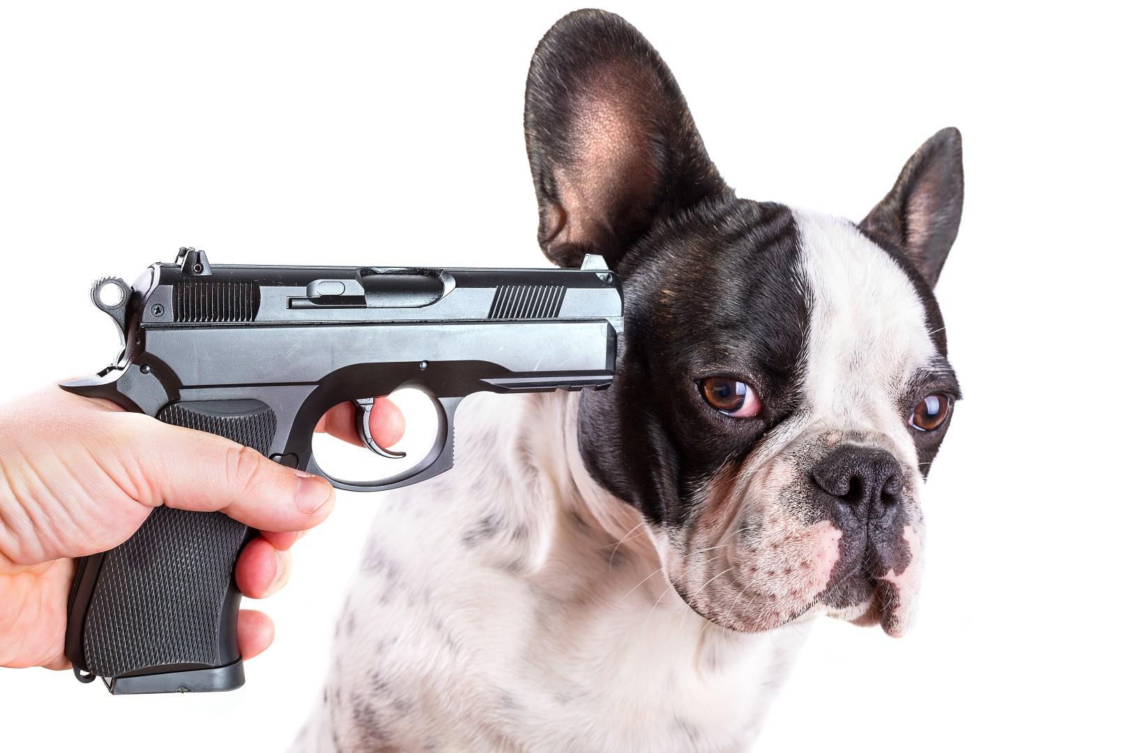 dog-gun-Large.jpg