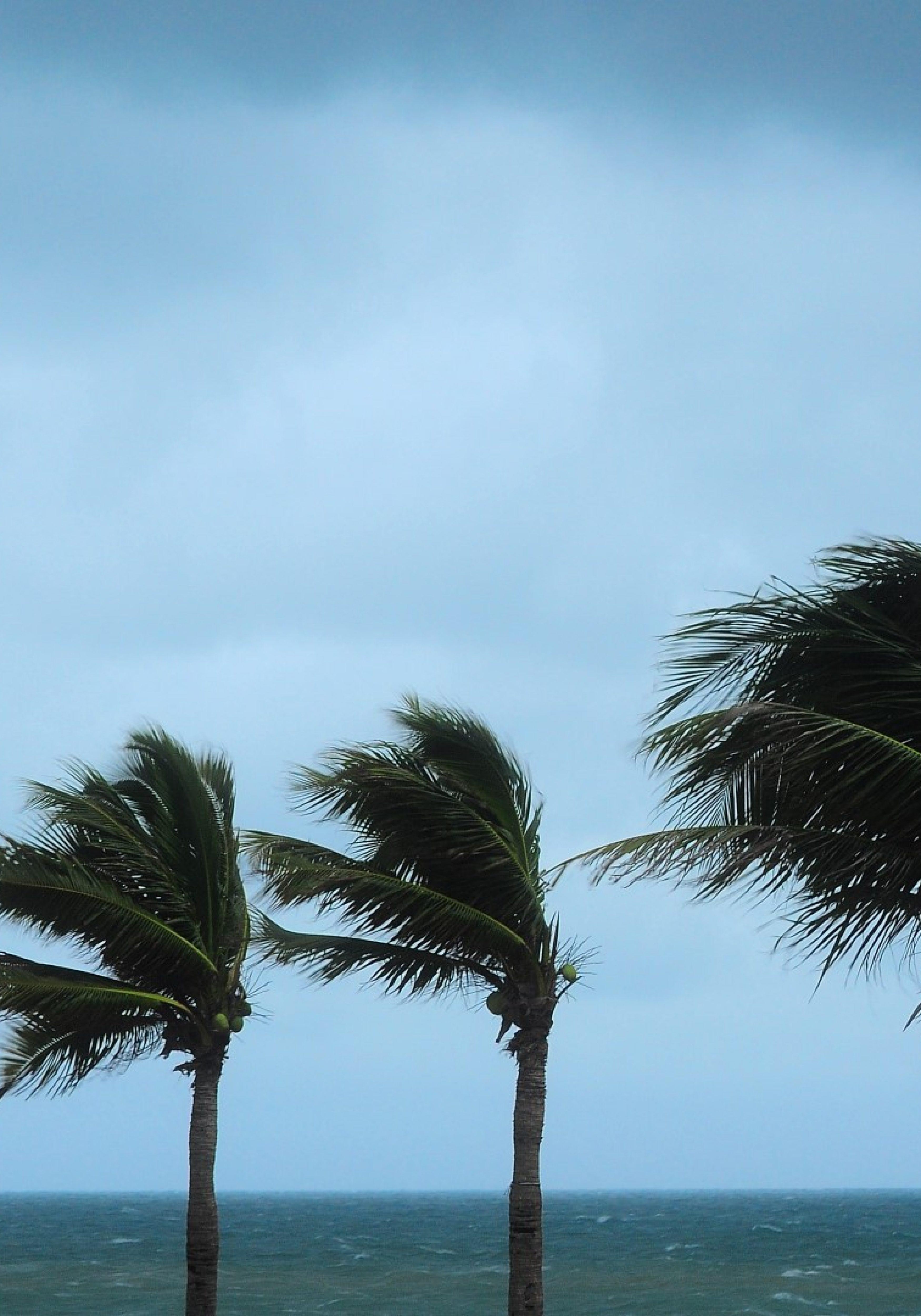 hurricane-winds-Large-3500x5000.jpg