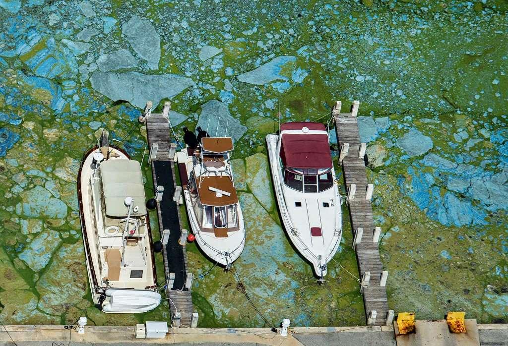 algae-bloom1.jpg