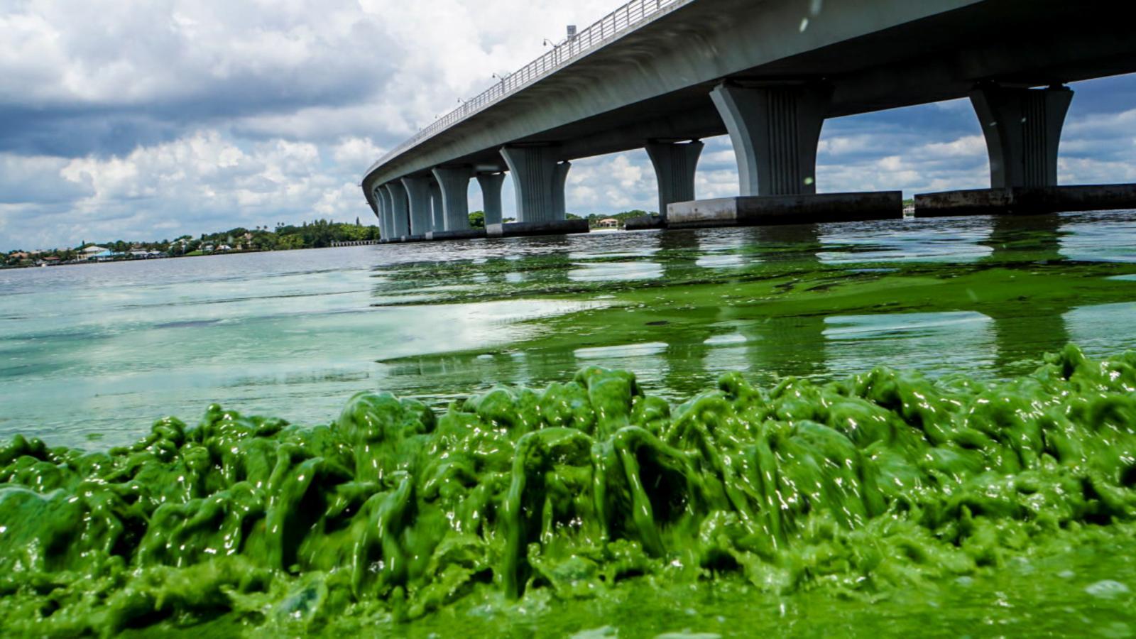 algae-bloom5.jpg