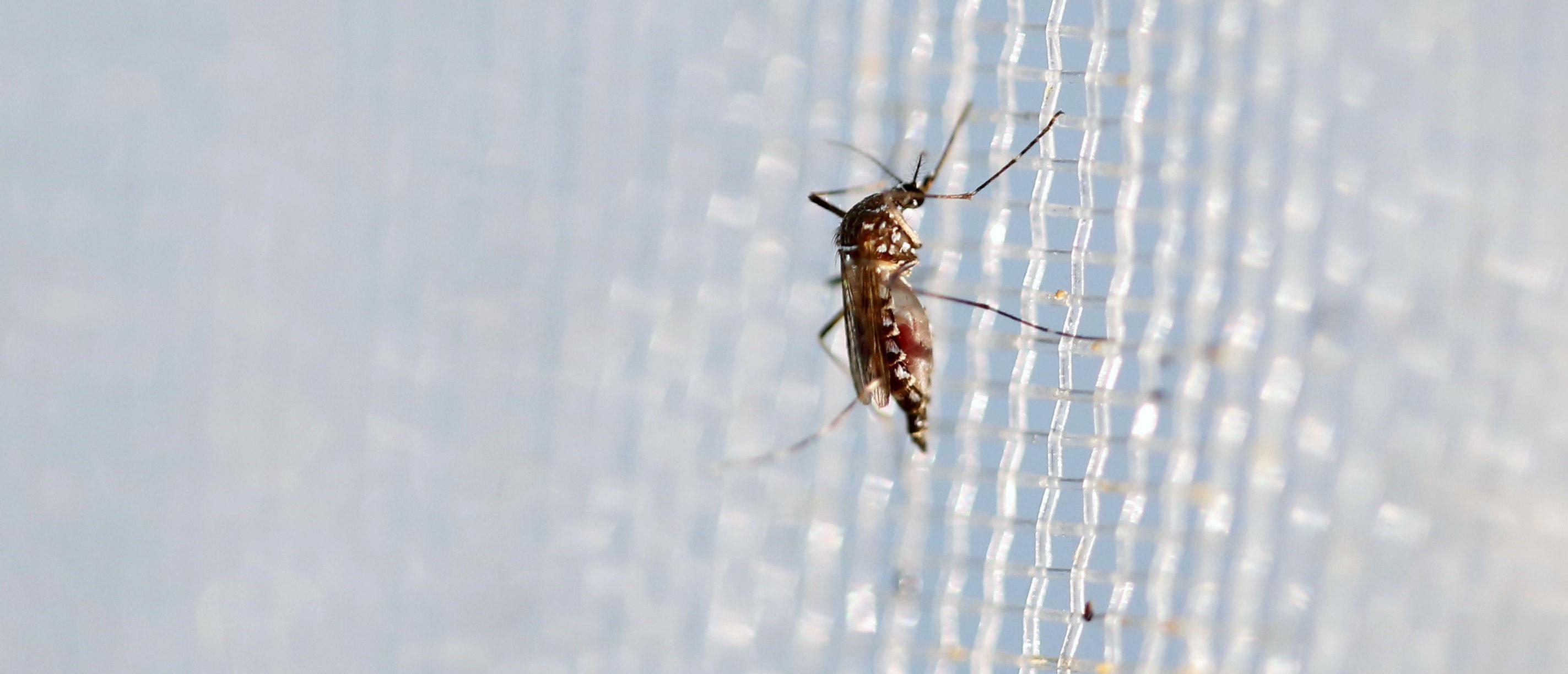 zika-fly-e1470258271812.jpg
