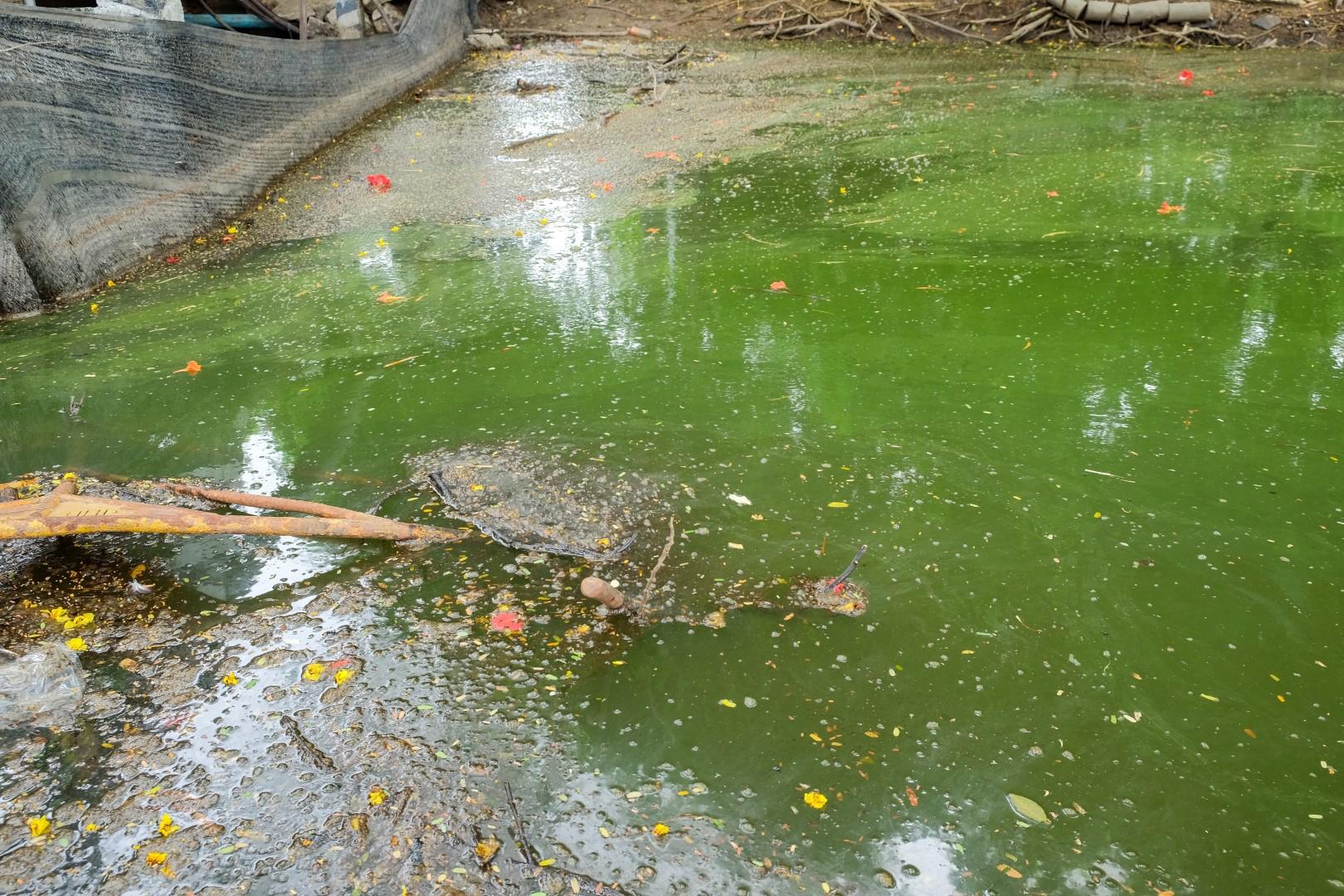 environmental-disaster-Florida-2018-Large.jpg