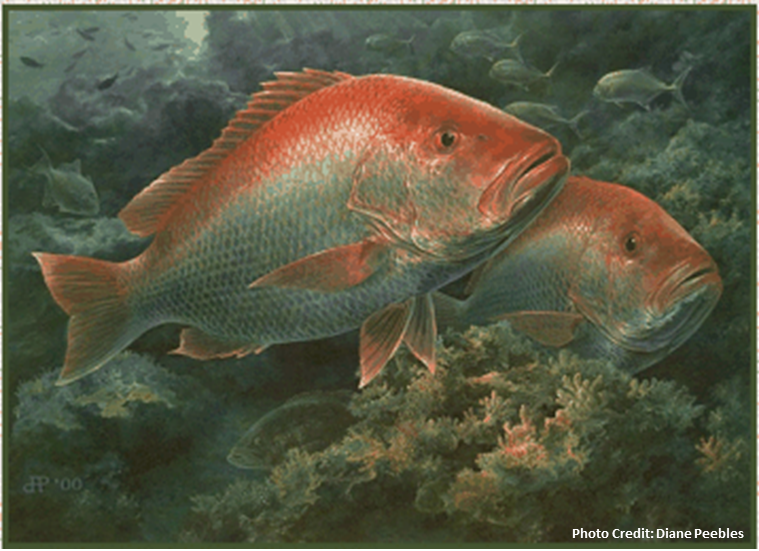 diane_peebles_red_snapper_illustration_with_credit.png
