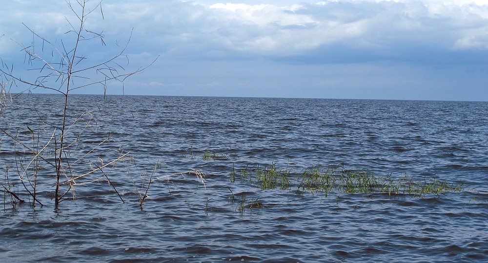 Lake_Okeechobee_from_Canal_Point.jpg