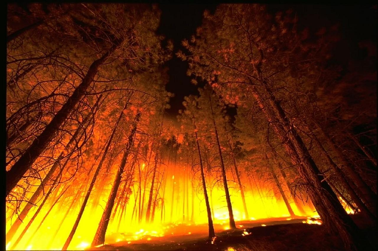 wildfire-568617_1280.jpg