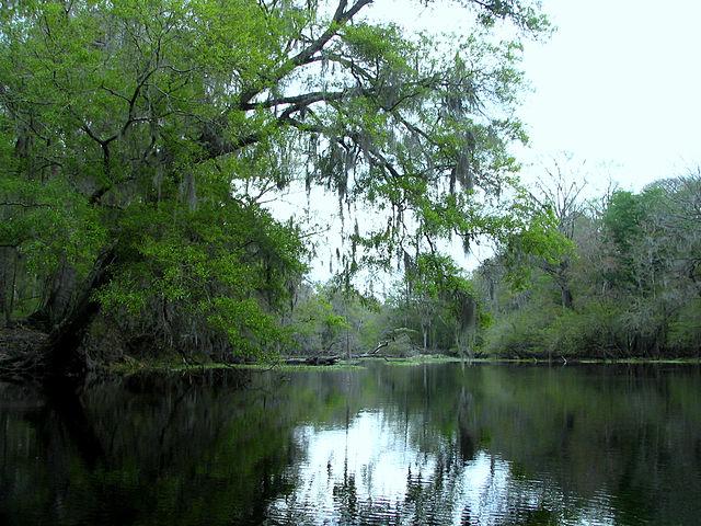 640px-Santa_Fe_River_near_river_rise_in_Oleno_State_Park_Florida.jpg