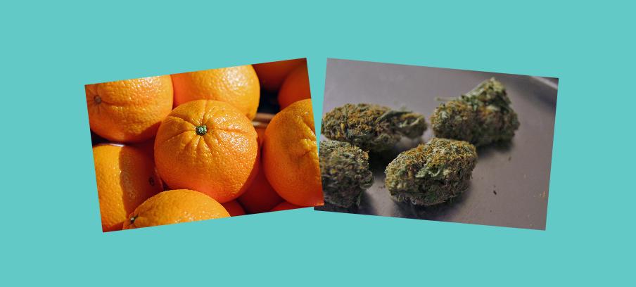 citrus-marijuana-inset-art.png