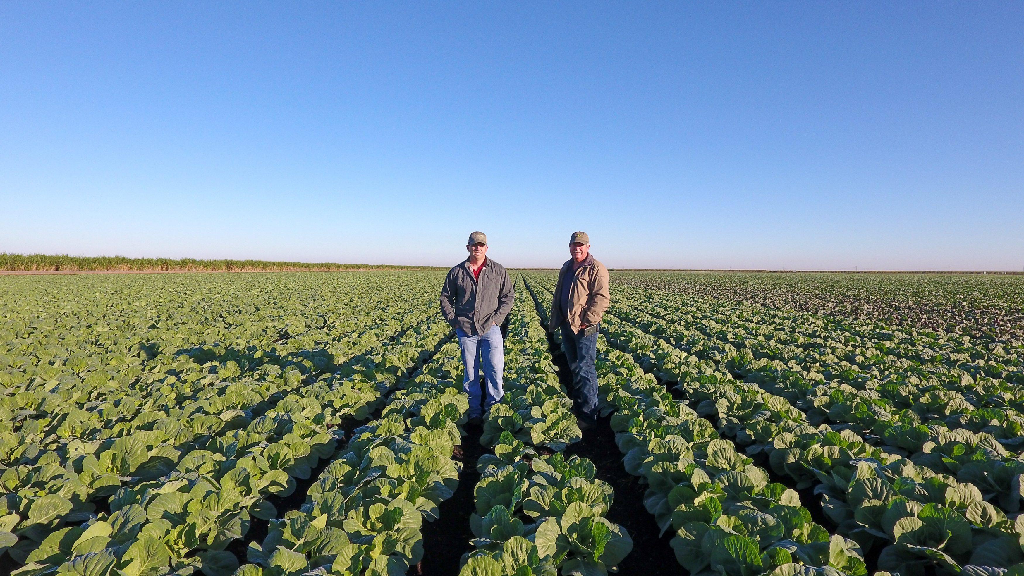 EAA-farmers-cabbage-day-3500x1969.jpg