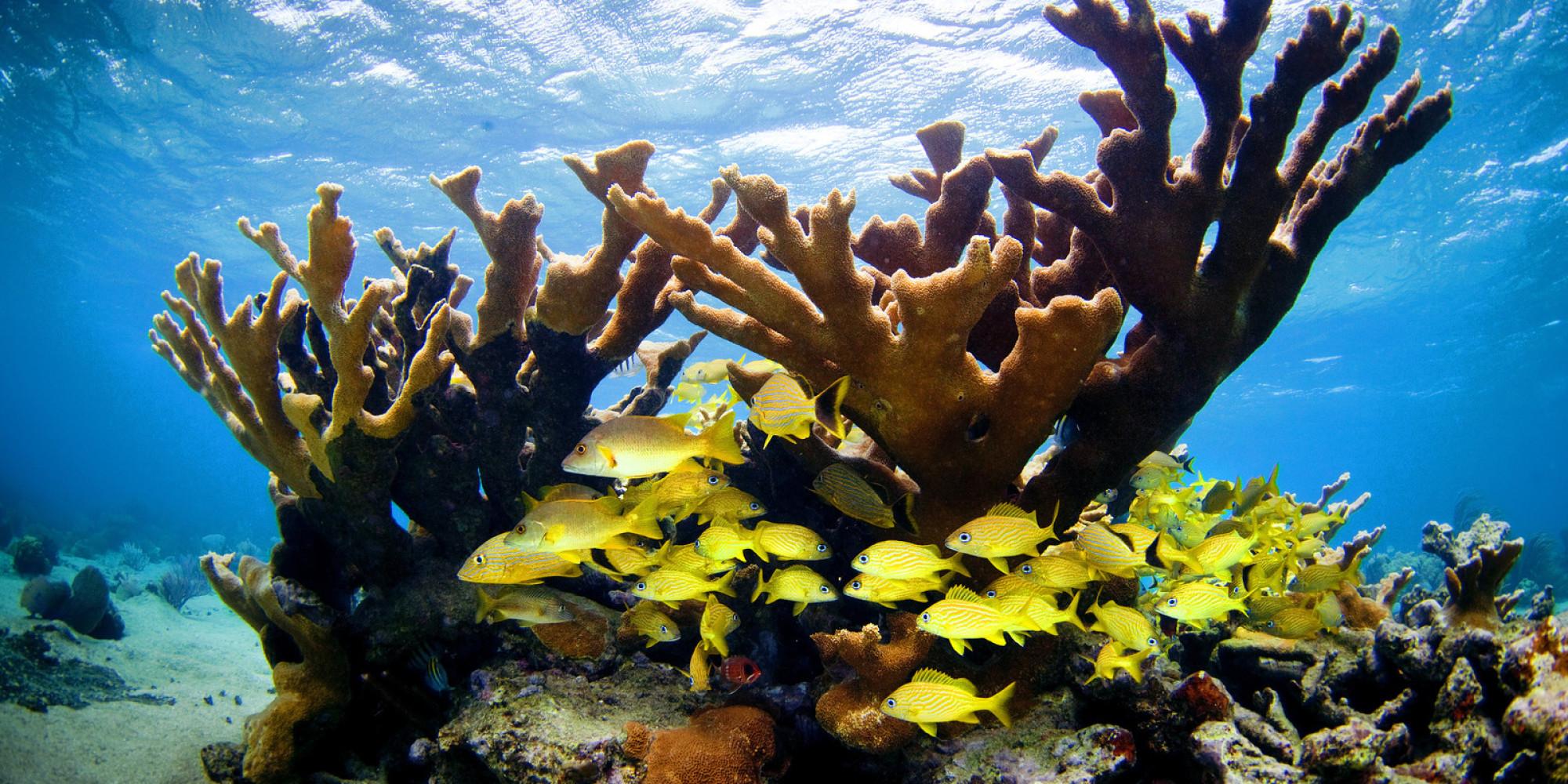 cuba-coral-reef.jpg