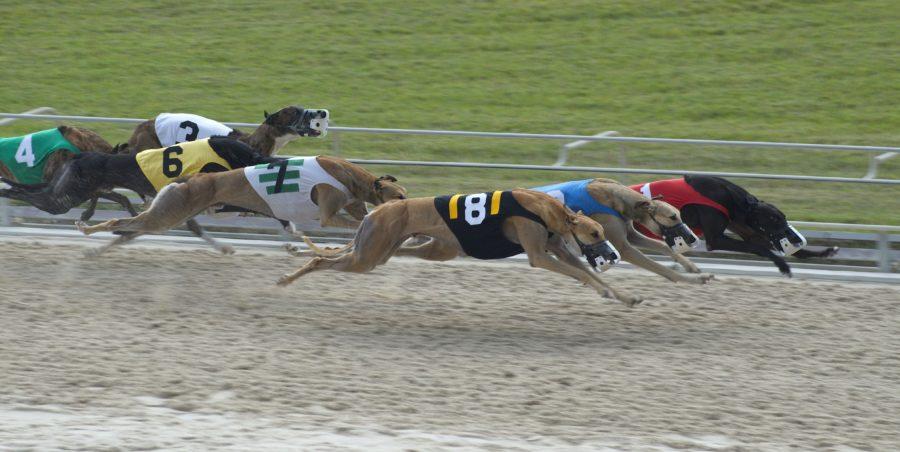 anti dog racing betting