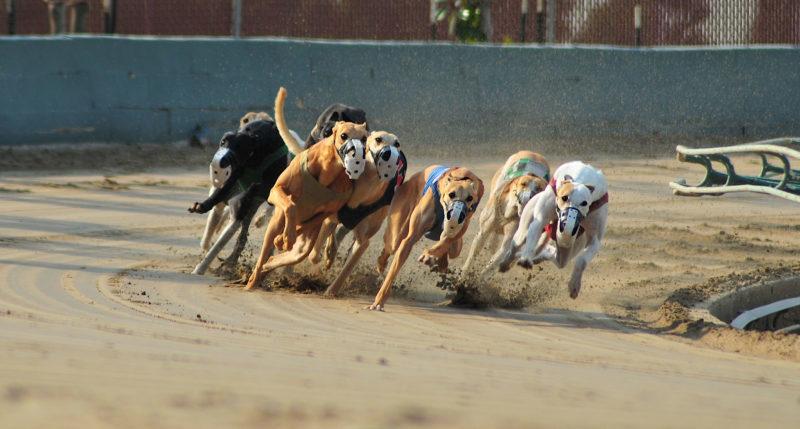 Greyhounds, Southland Park
