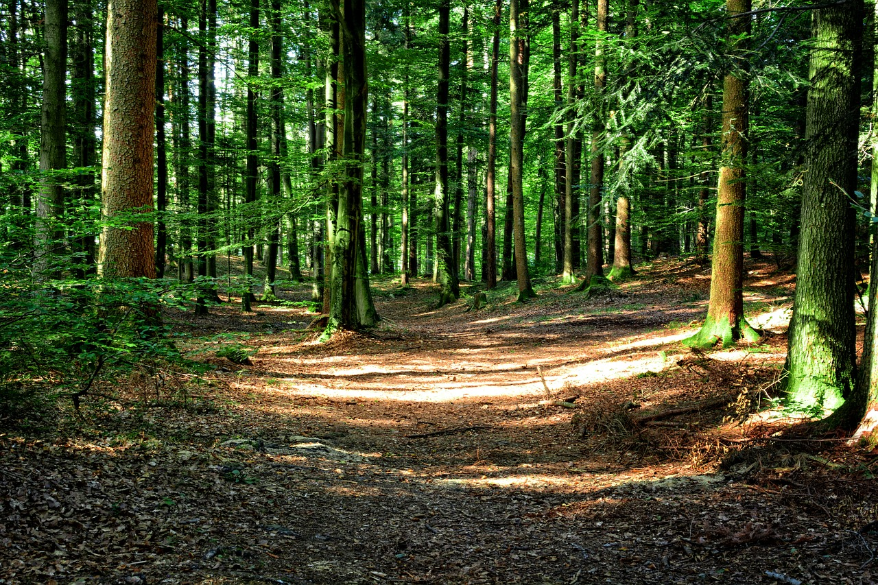 forest-972800_1280.jpg