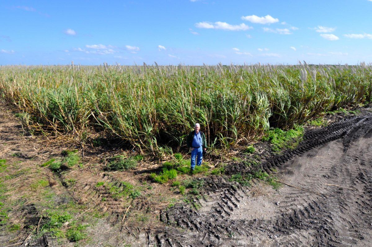 sugar-farmers-e1559678227614.jpg