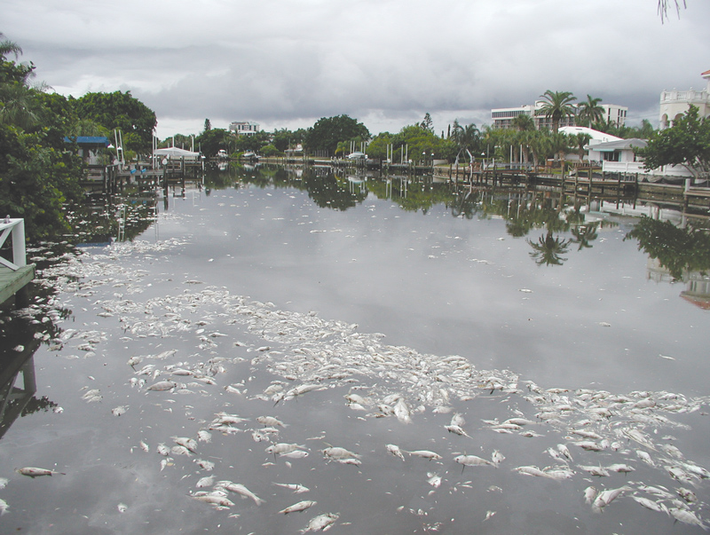 dead-fish-in-canal