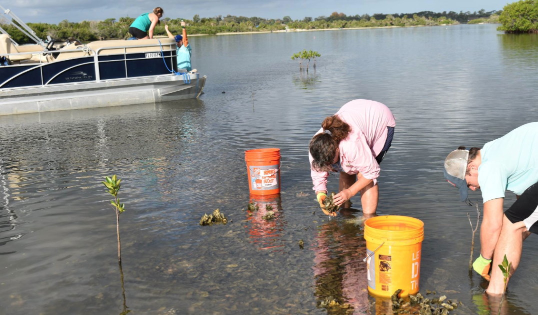Plastics In Indian River Lagoon Oysters Have Ucf Researchers Looking