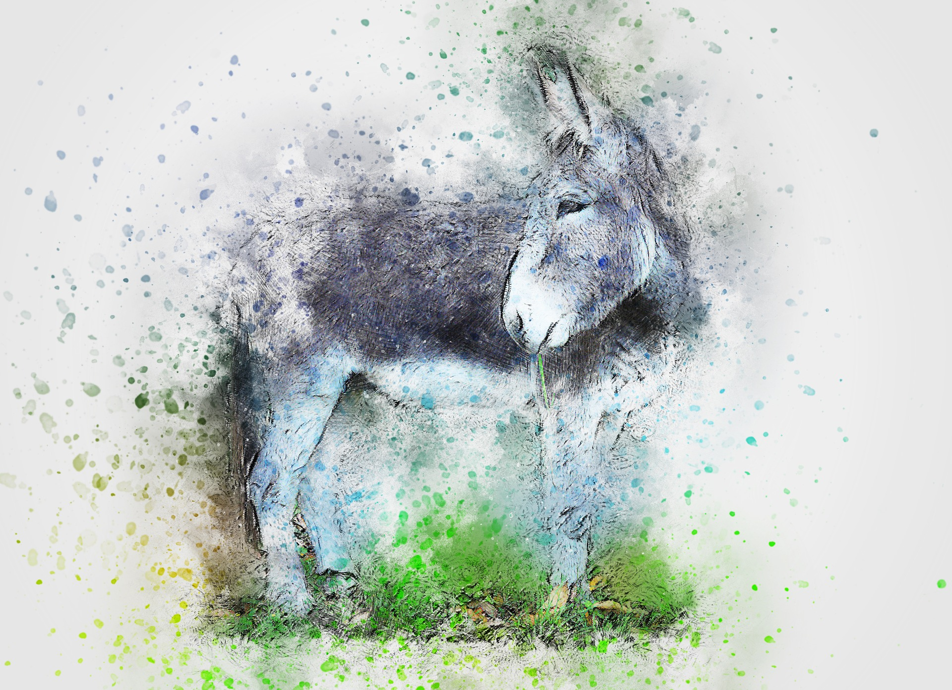 donkey-2737253_1920.jpg