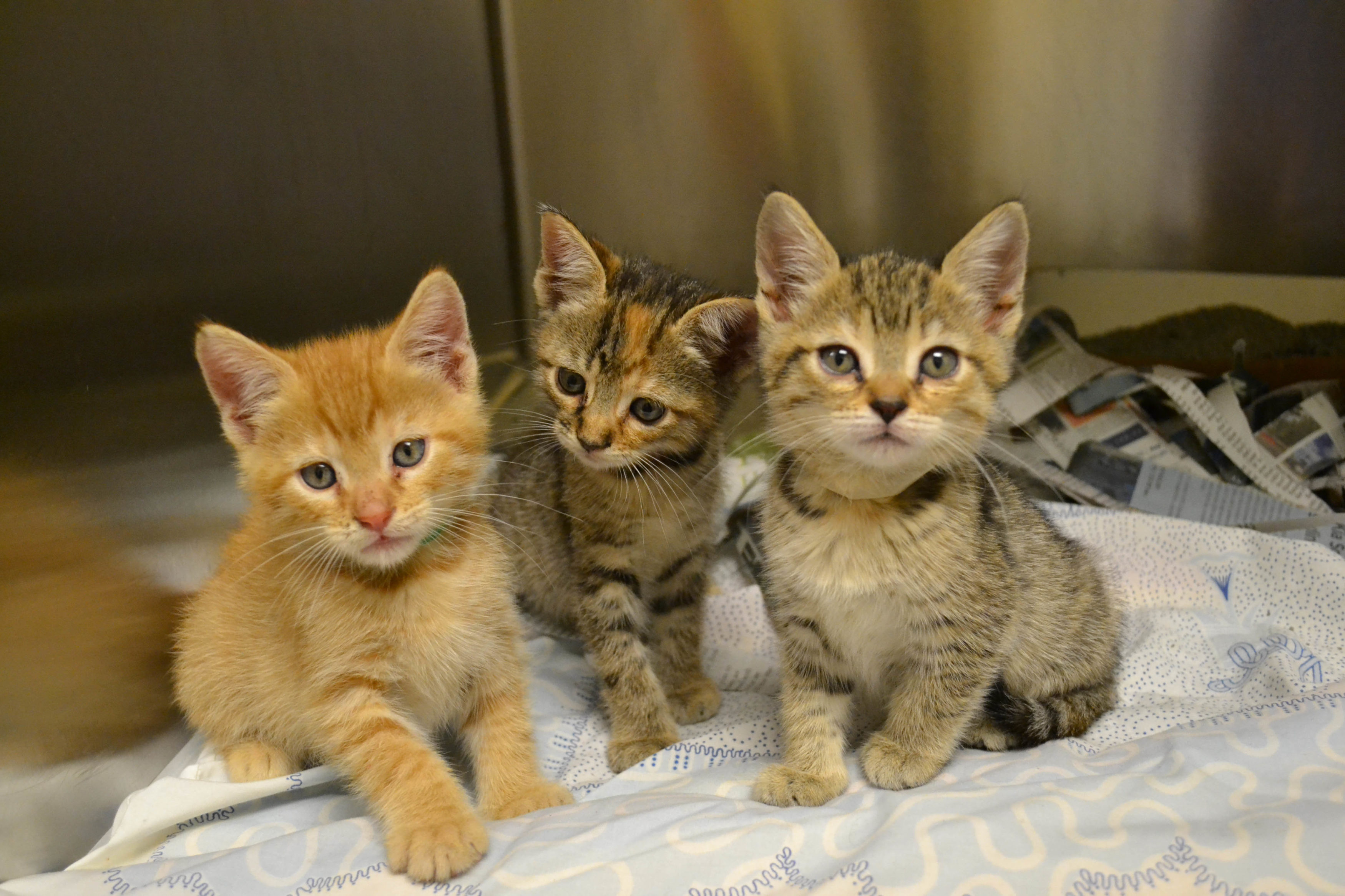 kittens-in-need-of-foster-homes-05072015-5-3500x2333.jpg