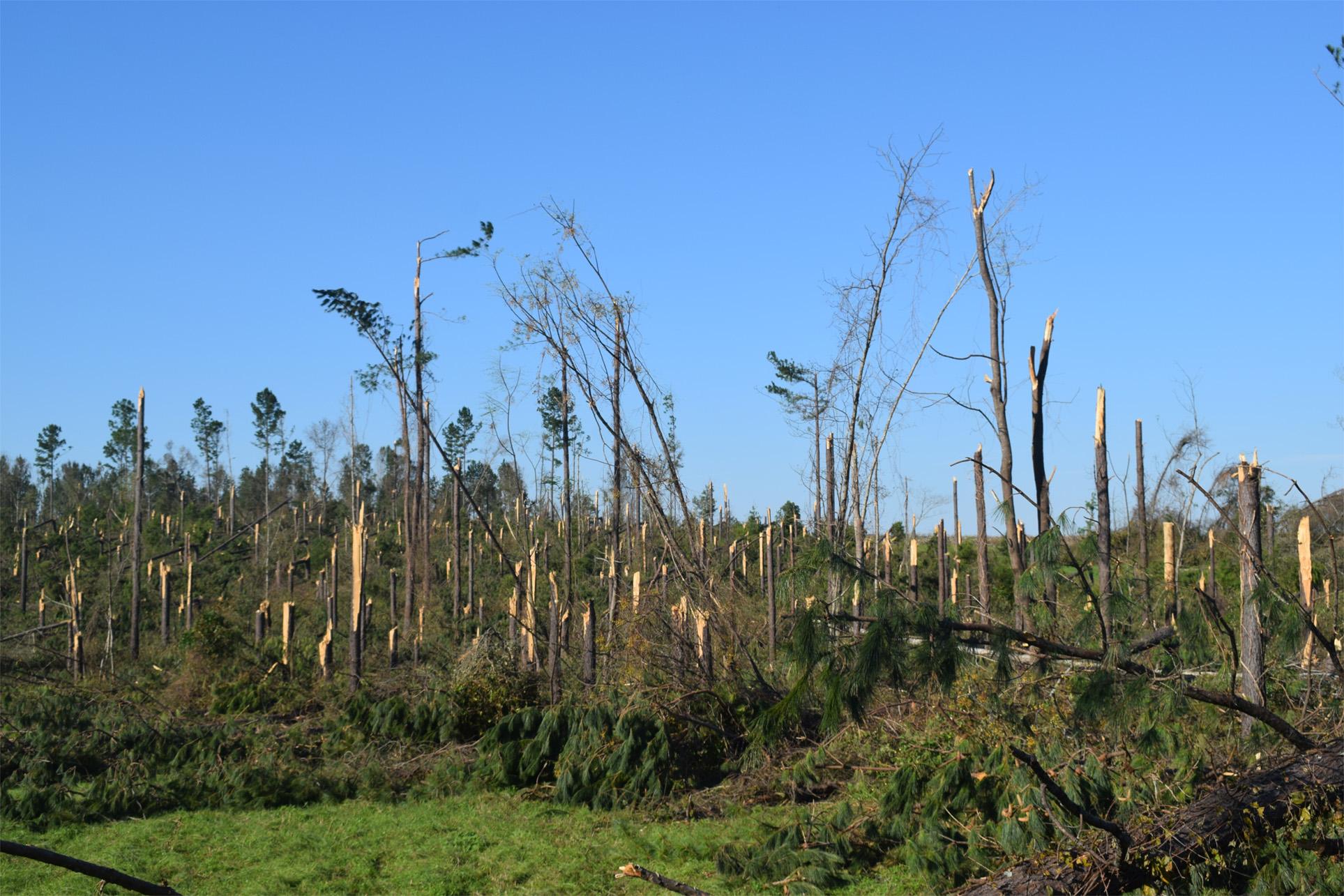 hurricane20forest20damage20smaller.jpg