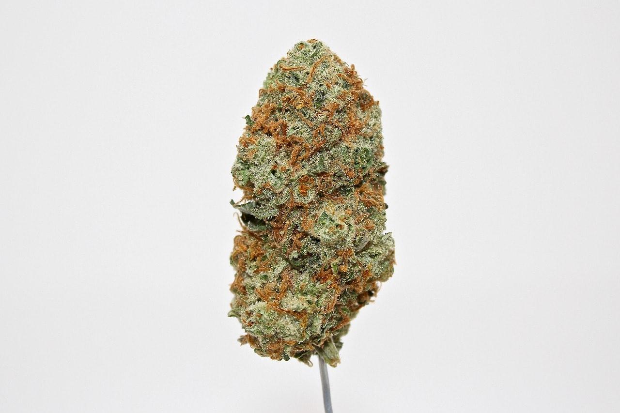 weed-3815121_1280