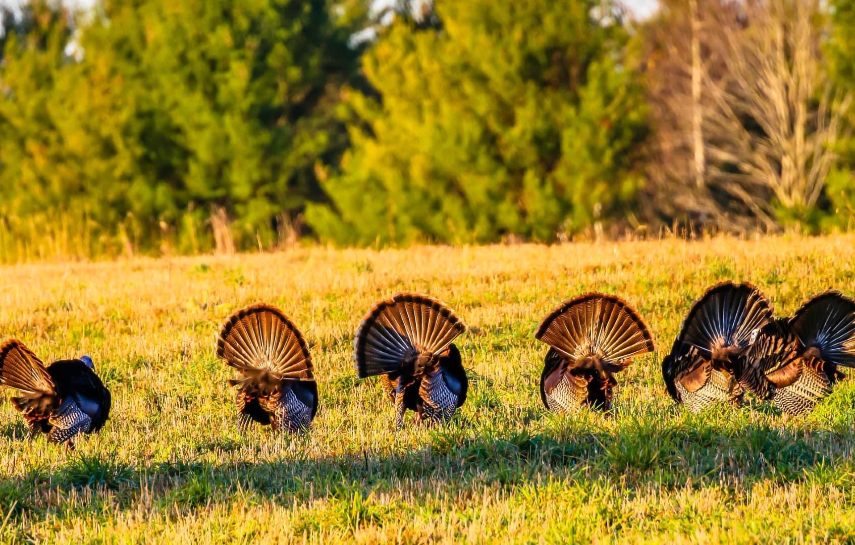 Turkey-2-Large.jpeg