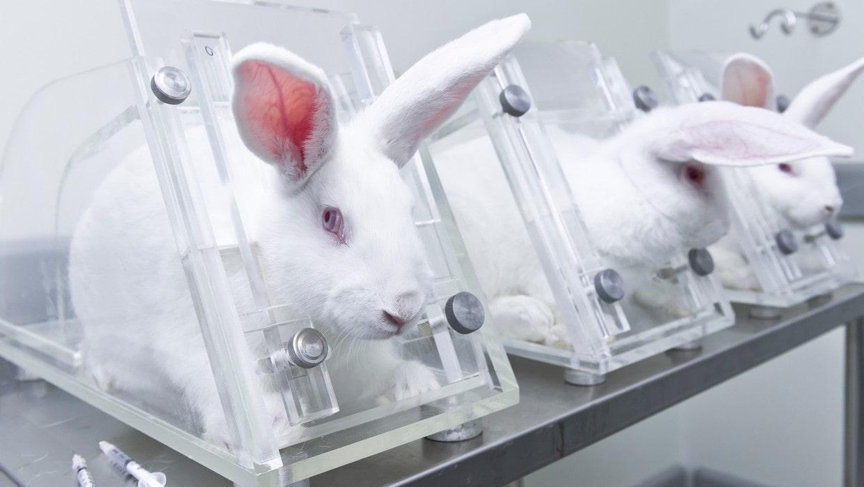 rabbit-testing-491183