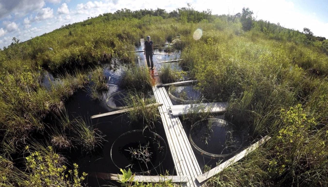 The-Everglades.jpg