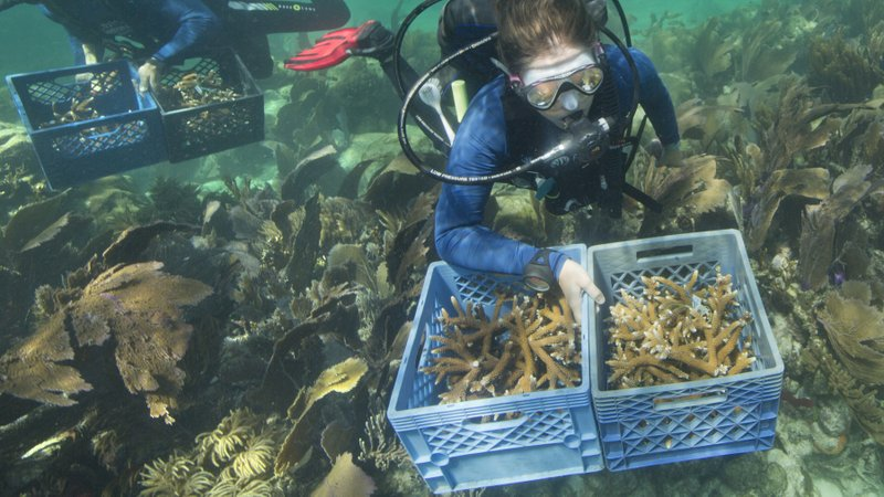 florida-keys-coral-reefs.jpg