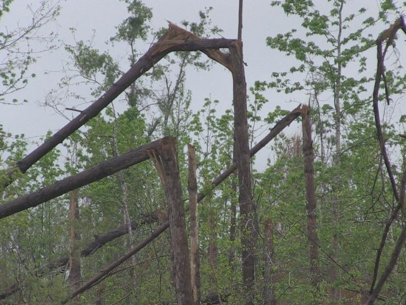 hurricane-Michael-timber.jpg