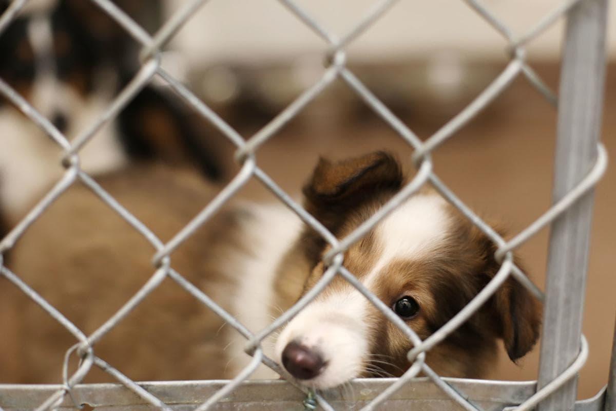 shelter-animal.jpg