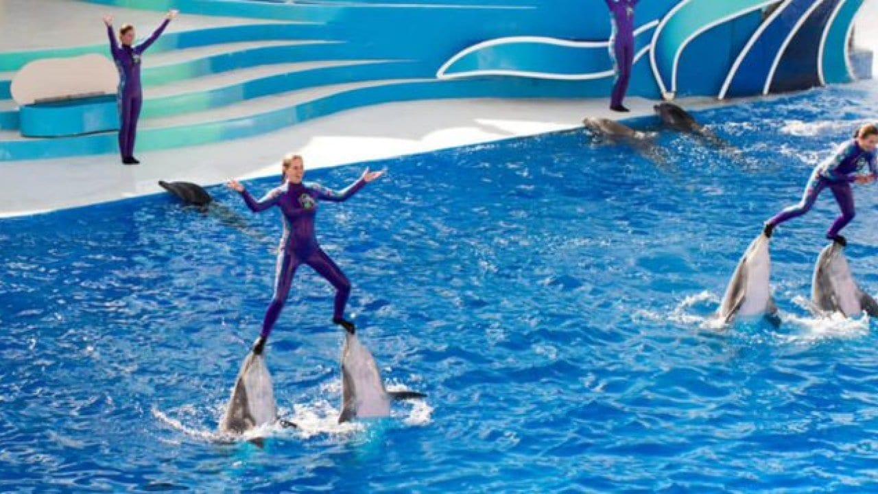 SeaWorld-Sea-World-dolphins.jpg