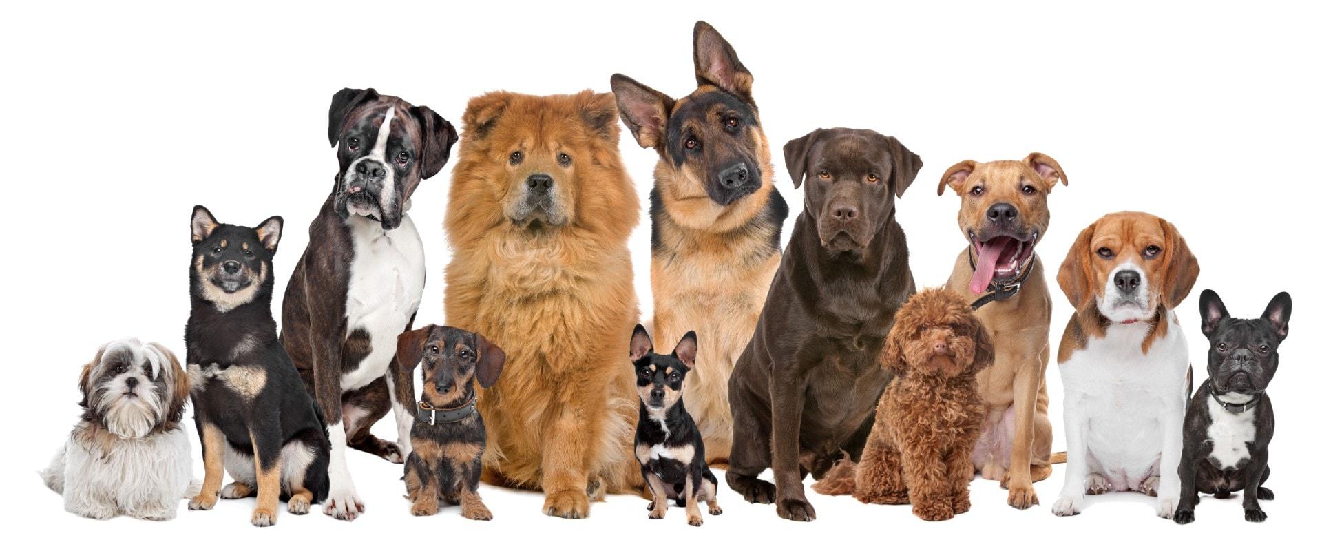 dogs-01.06-Large.jpg