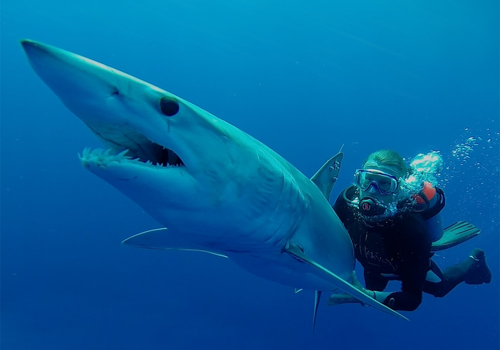 guy-harvey-shark.jpg